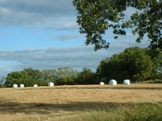 Plastic wrapped straw bales in a field adjacent to Collendean Lane - geograph.org.uk - 24415.jpg