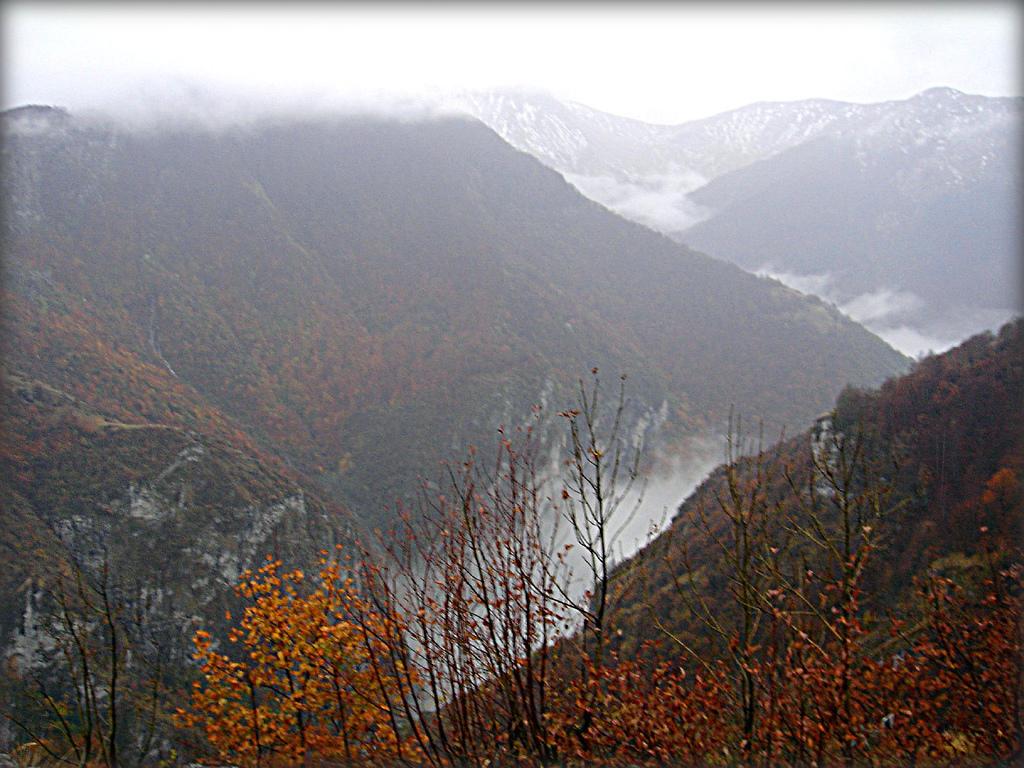 Rakitnica Wikipedia