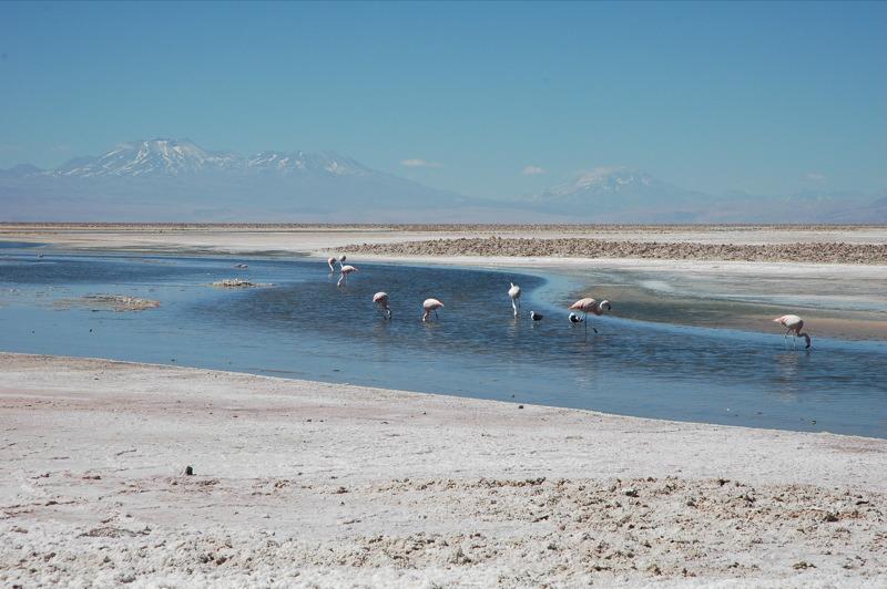 File:Salar de Atacama Pular.jpg