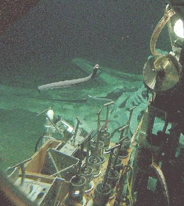 File sample collecting at whale wikimedia commons for Ocean floor description
