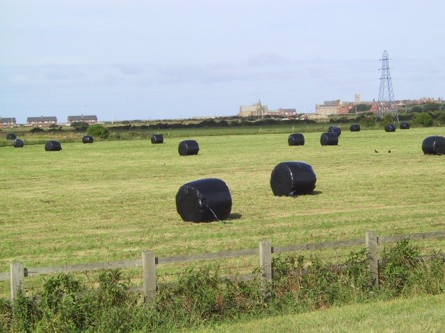 File:Silage bales on fields near Woodcock Wood on Fleetwood Farm - geograph.org.uk - 41995.jpg