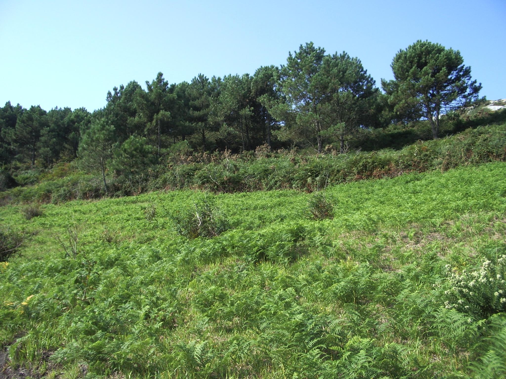 File:Tipo de vegetación en las Islas Cíes (Galicia).jpg ...