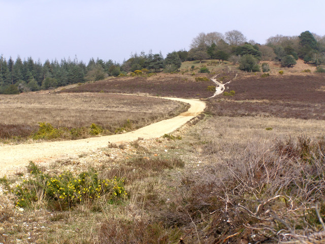 Track from Hasley Inclosure to Sloden Inclosure, New Forest - geograph.org.uk - 157293