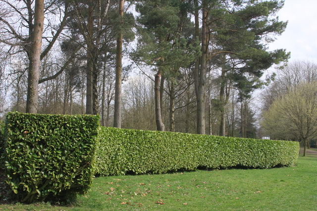 """Tree cathedral showing outer """"wall"""". - geograph.org.uk - 1238975"""