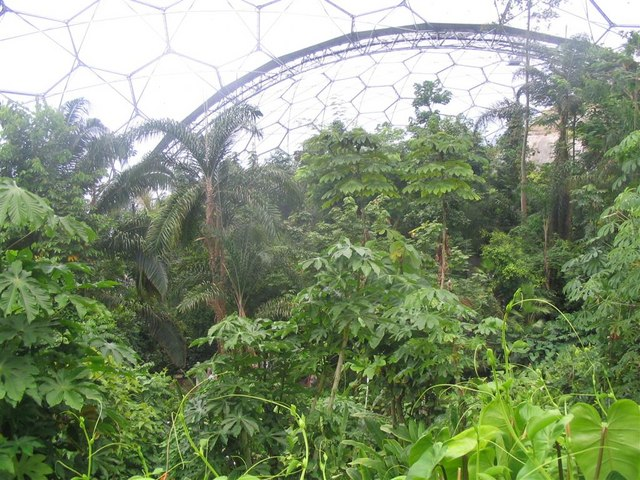 FileTropical forest canopy at Eden - geograph.org.uk - 821766. & File:Tropical forest canopy at Eden - geograph.org.uk - 821766.jpg ...