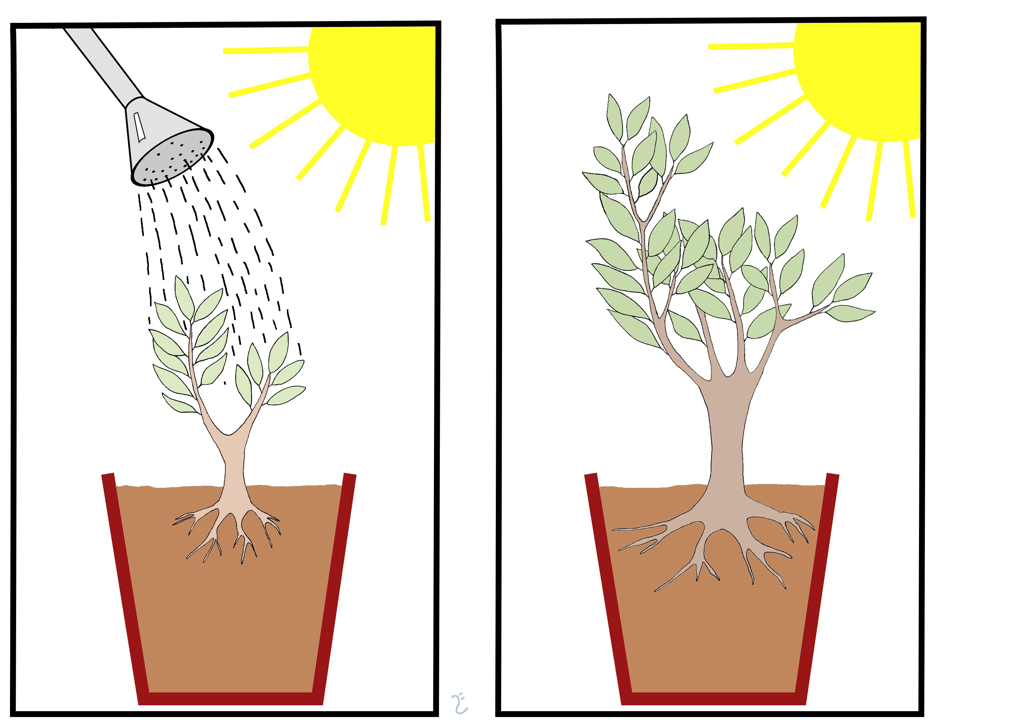 How Do Trees Get Their Mass?