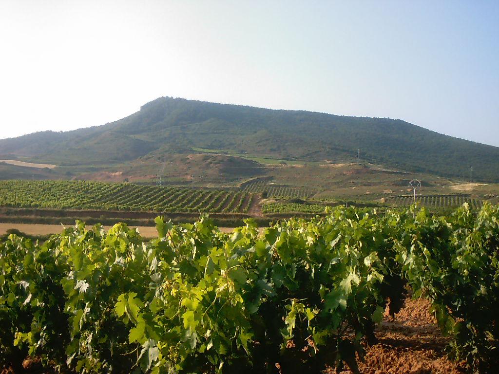 Agricultura a espanya viquip dia l 39 enciclop dia lliure - La mediterranea ...