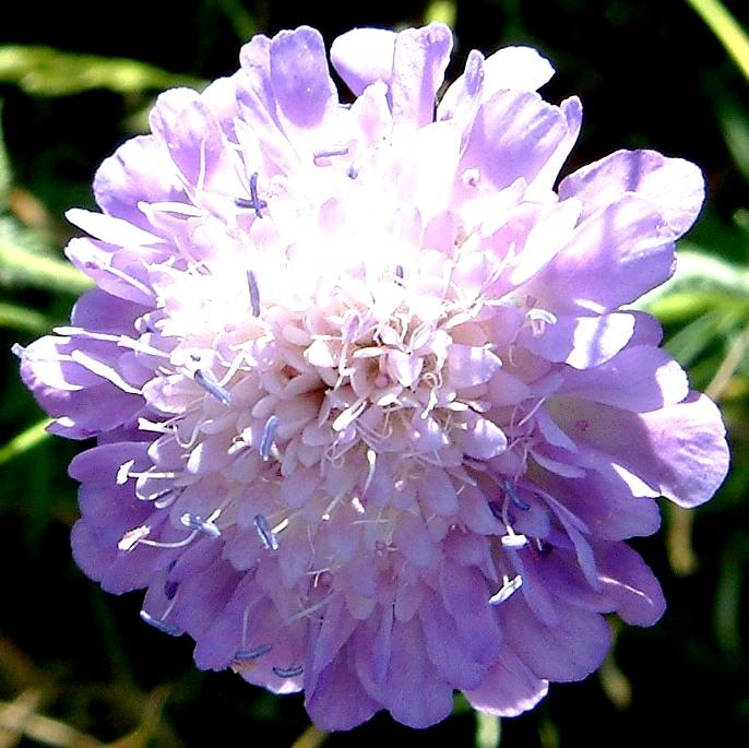 farbe lila bedeutung
