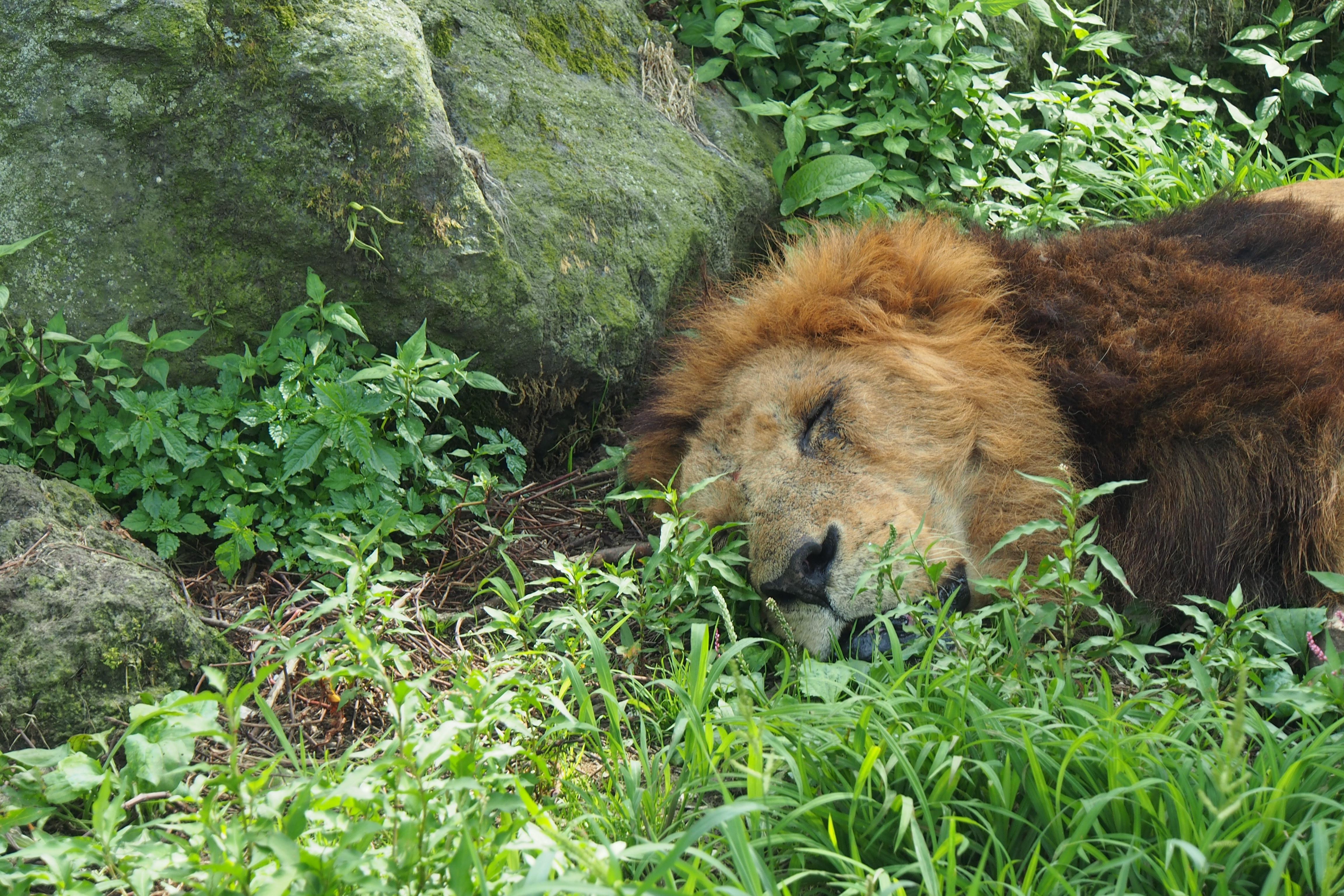 The African Safari Experience Taiken Japan