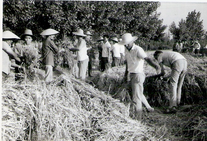 Farmers during the Cultural Revolution, 1970