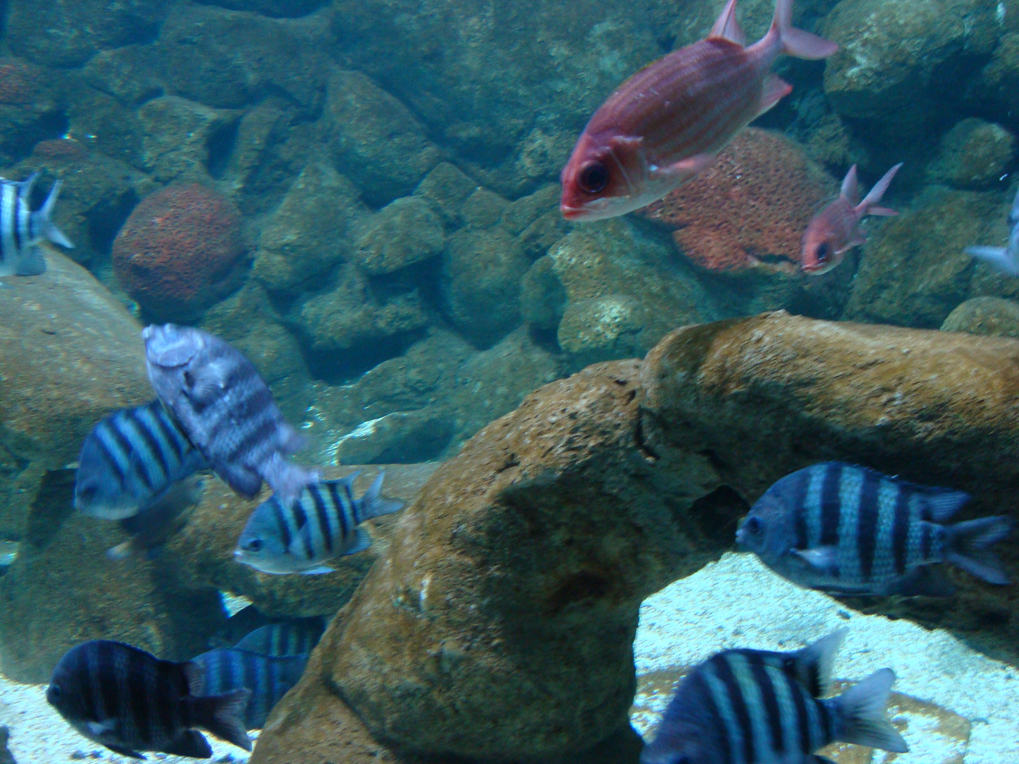 File:Aquario de sao paulo2.JPG - Wikimedia Commons