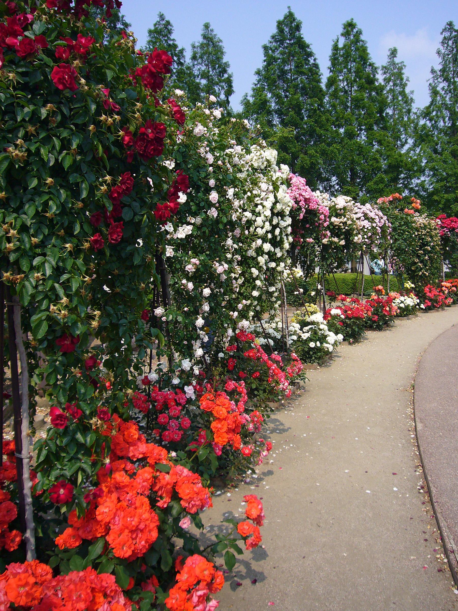 Rose Garden Wikiwand