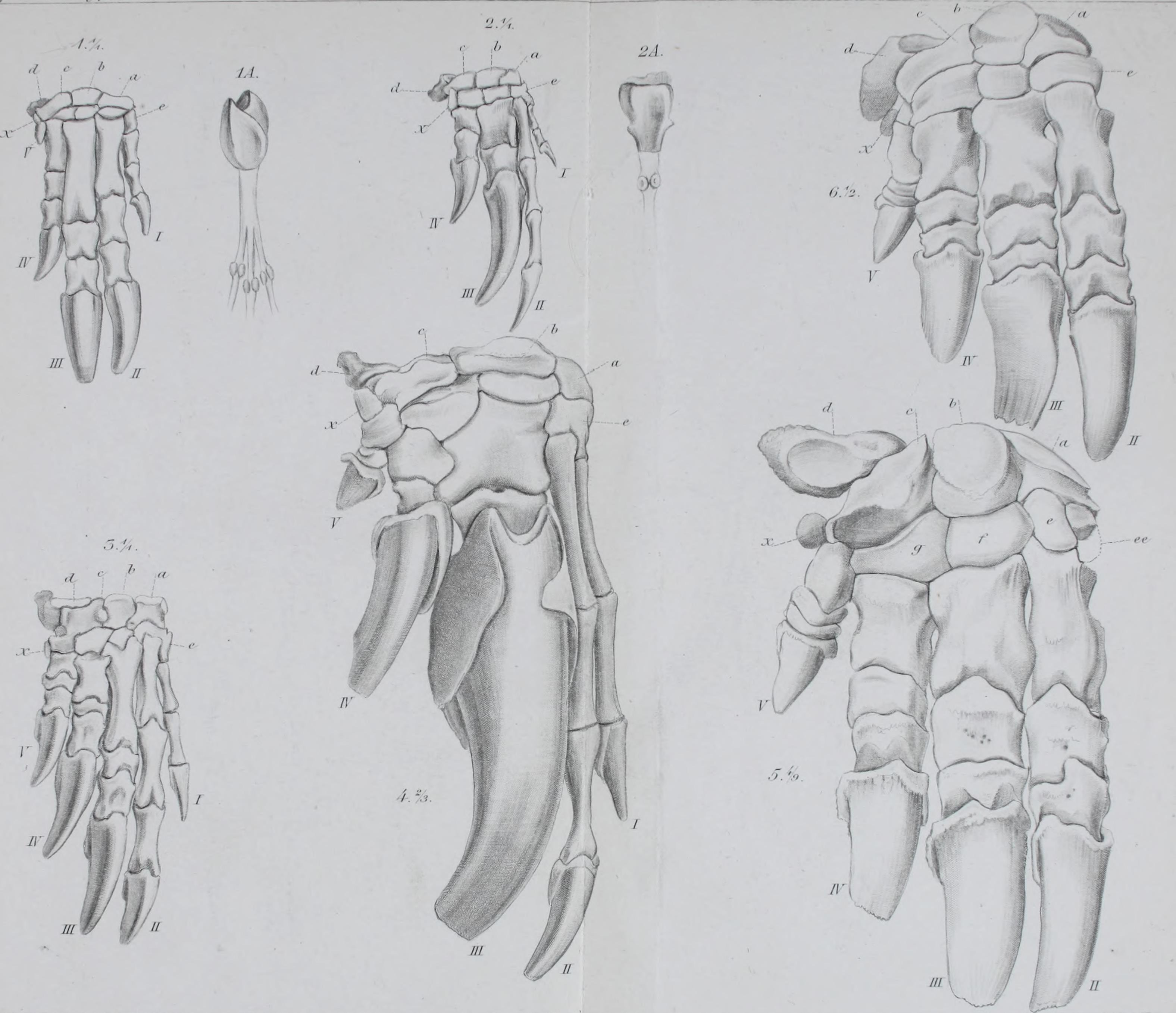 Gemütlich Anatomie Und Physiologie Animationsvideos Ideen ...