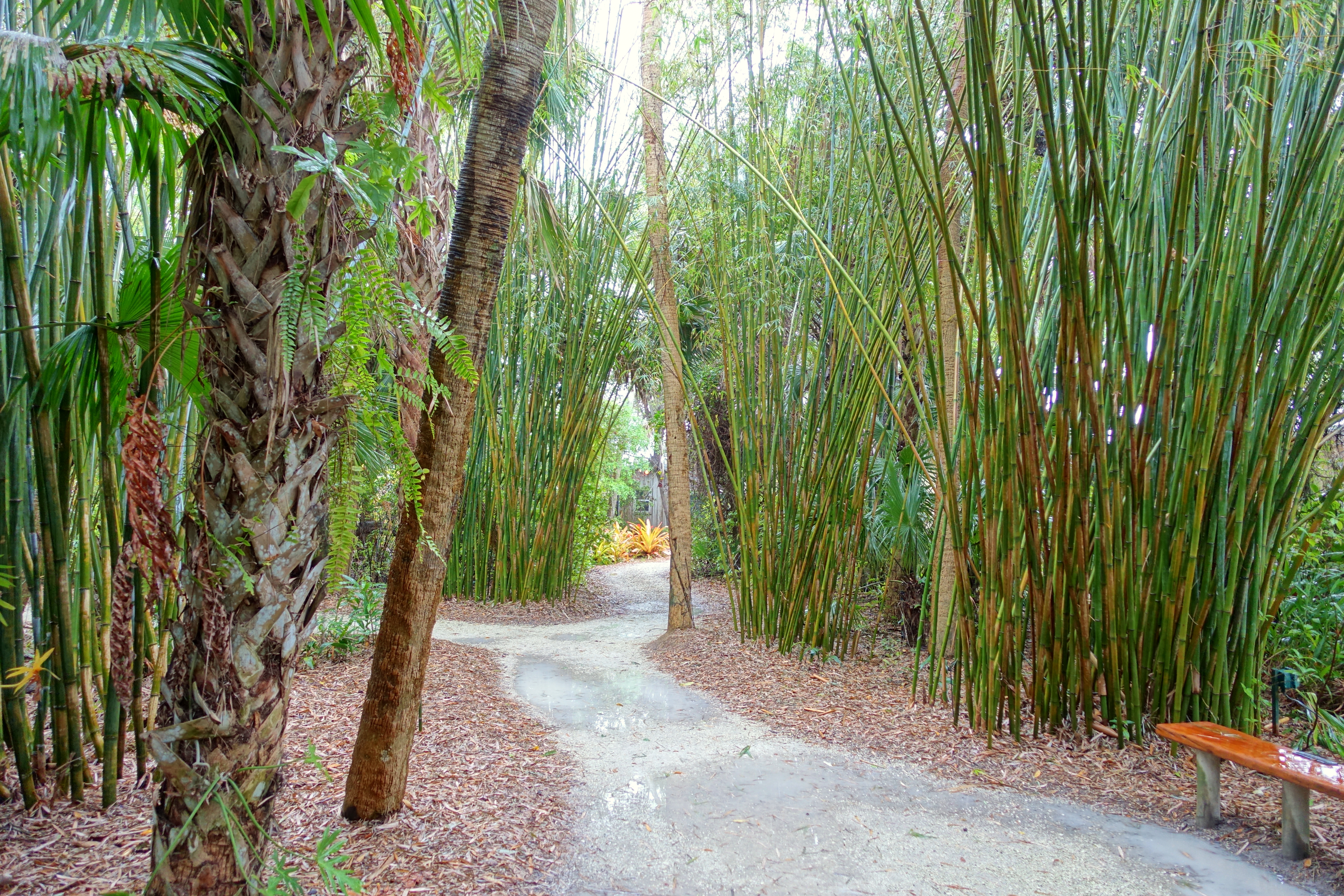 File:Bamboo groves - McKee Botanical Garden - Vero Beach, Florida ...