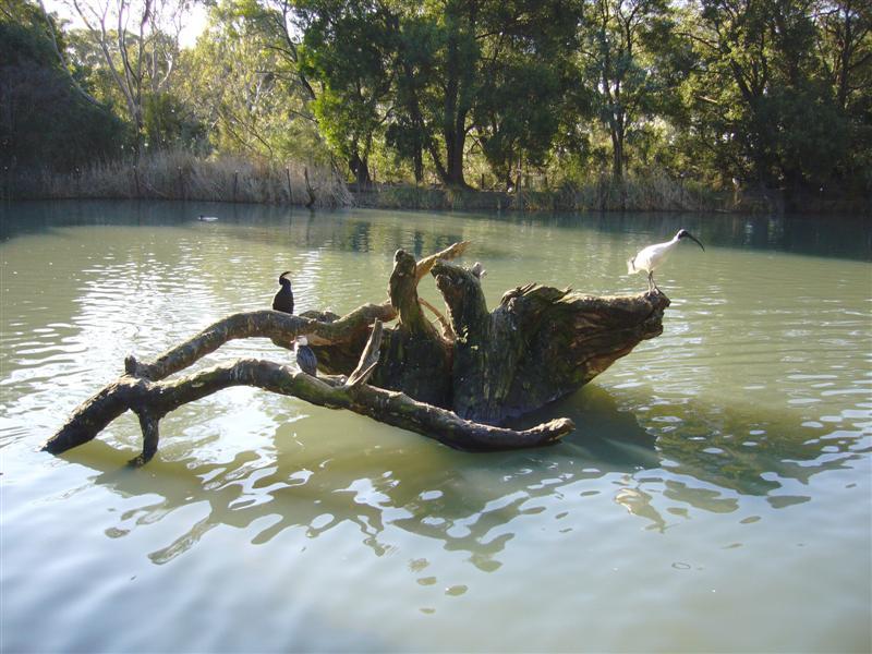 File Birds Cleland Wildlife Park South Australia Panoramio Jpg