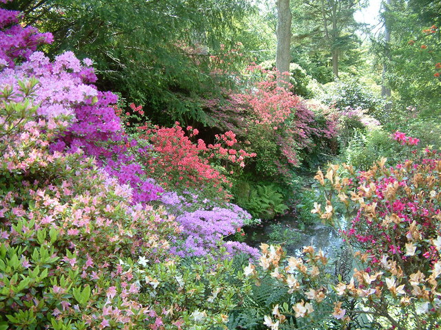 Bodnant Garden - geograph.org.uk - 208823