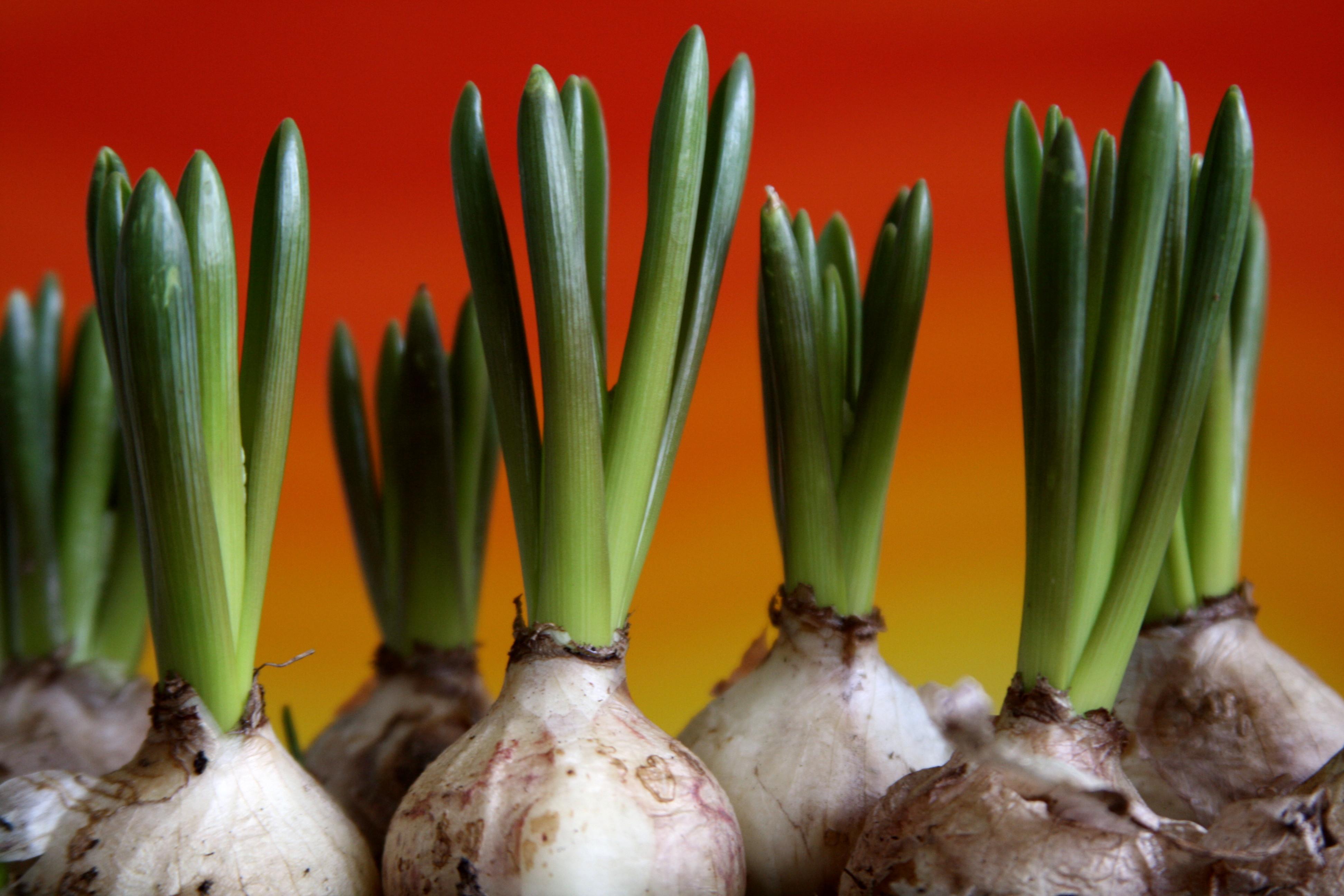 2. Growing Plants - National 4 Biology
