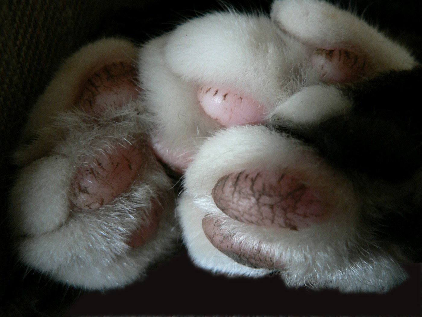 Dogs Paw Image