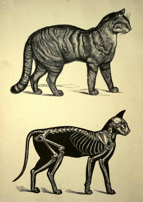 Black Cat Bones Euphoria Madness And Pain