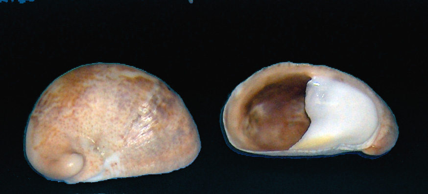 Image Result For Slipper Wikipedia