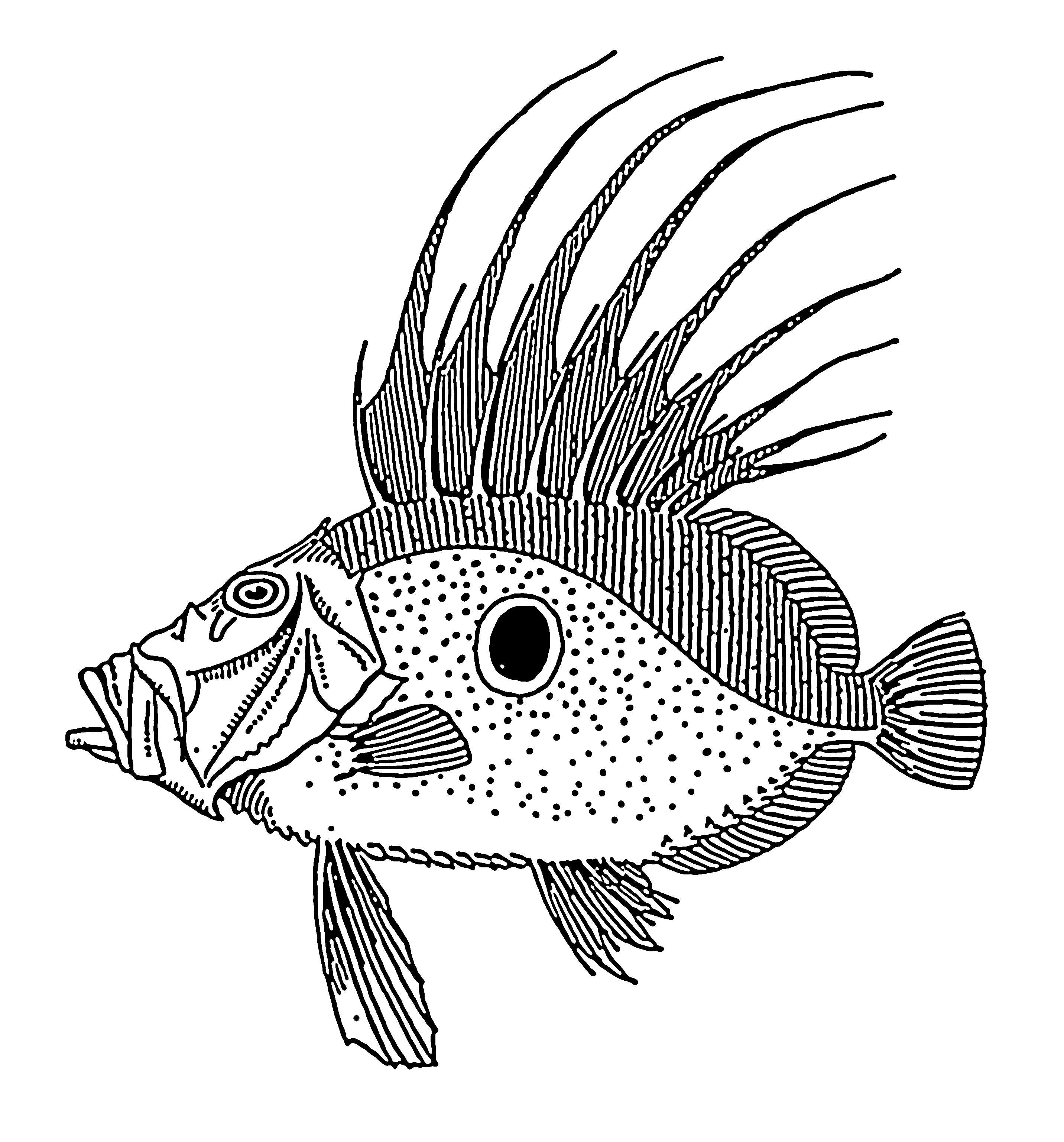 Free coloring pages of dori for Picture of dory fish