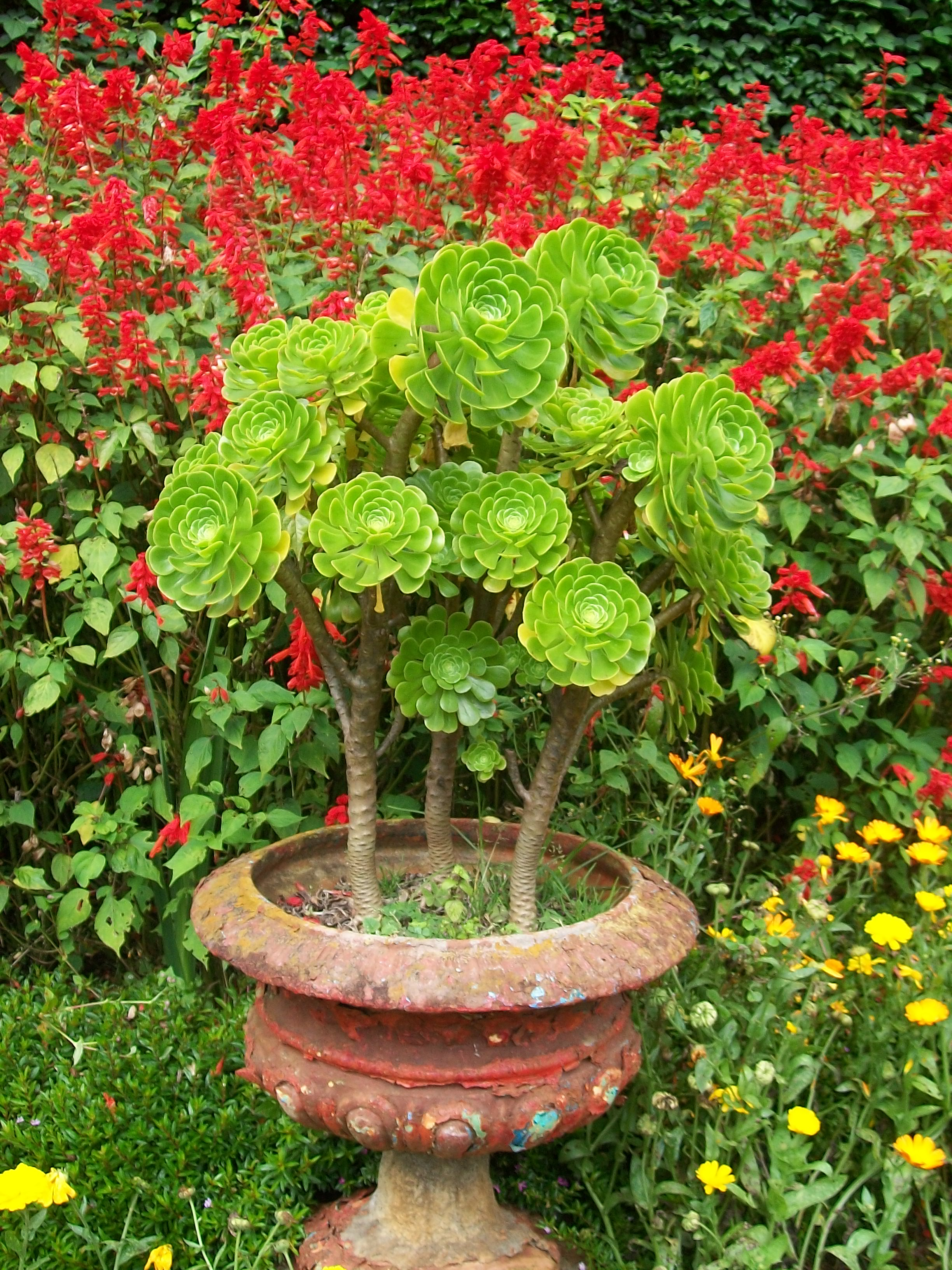file flower pot jpg wikimedia commons