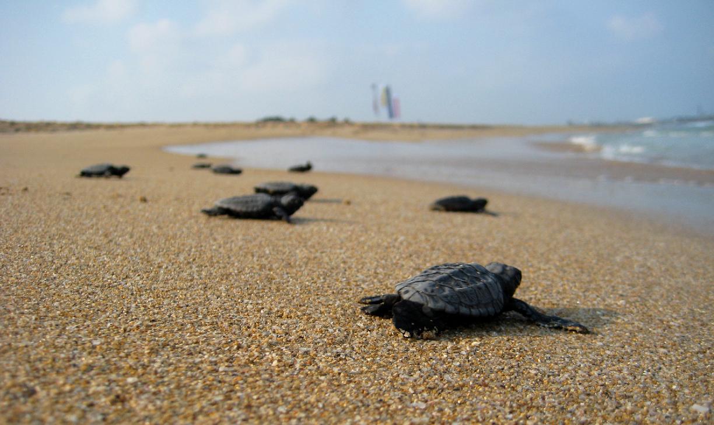 korytnačky - zaujímavosti o zvieratách