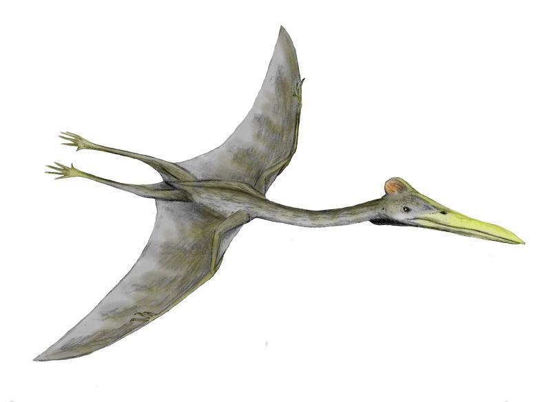 Hatzegopteryx Size File:Hatzegopte...