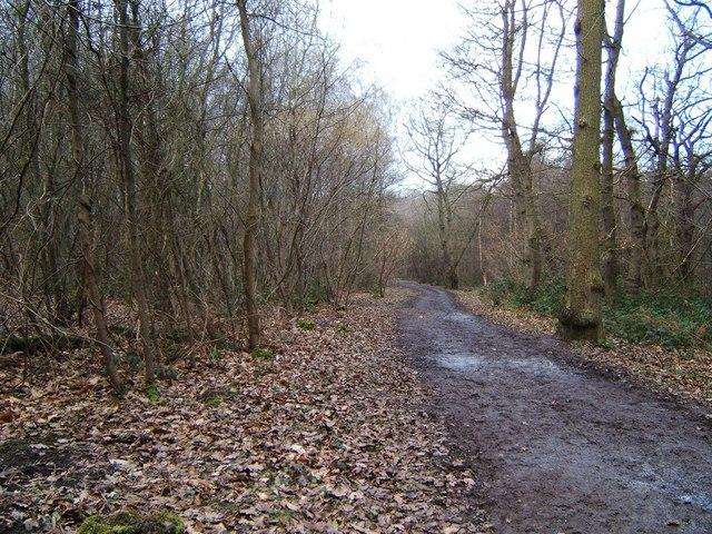Hockley Wood - geograph.org.uk - 129948