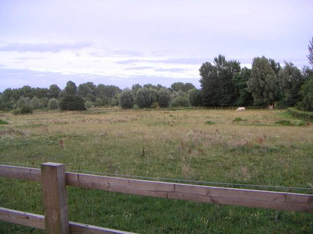 Horse Paddock - geograph.org.uk - 211867