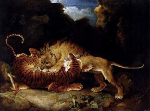 Tiger versus lion - Wikipedia