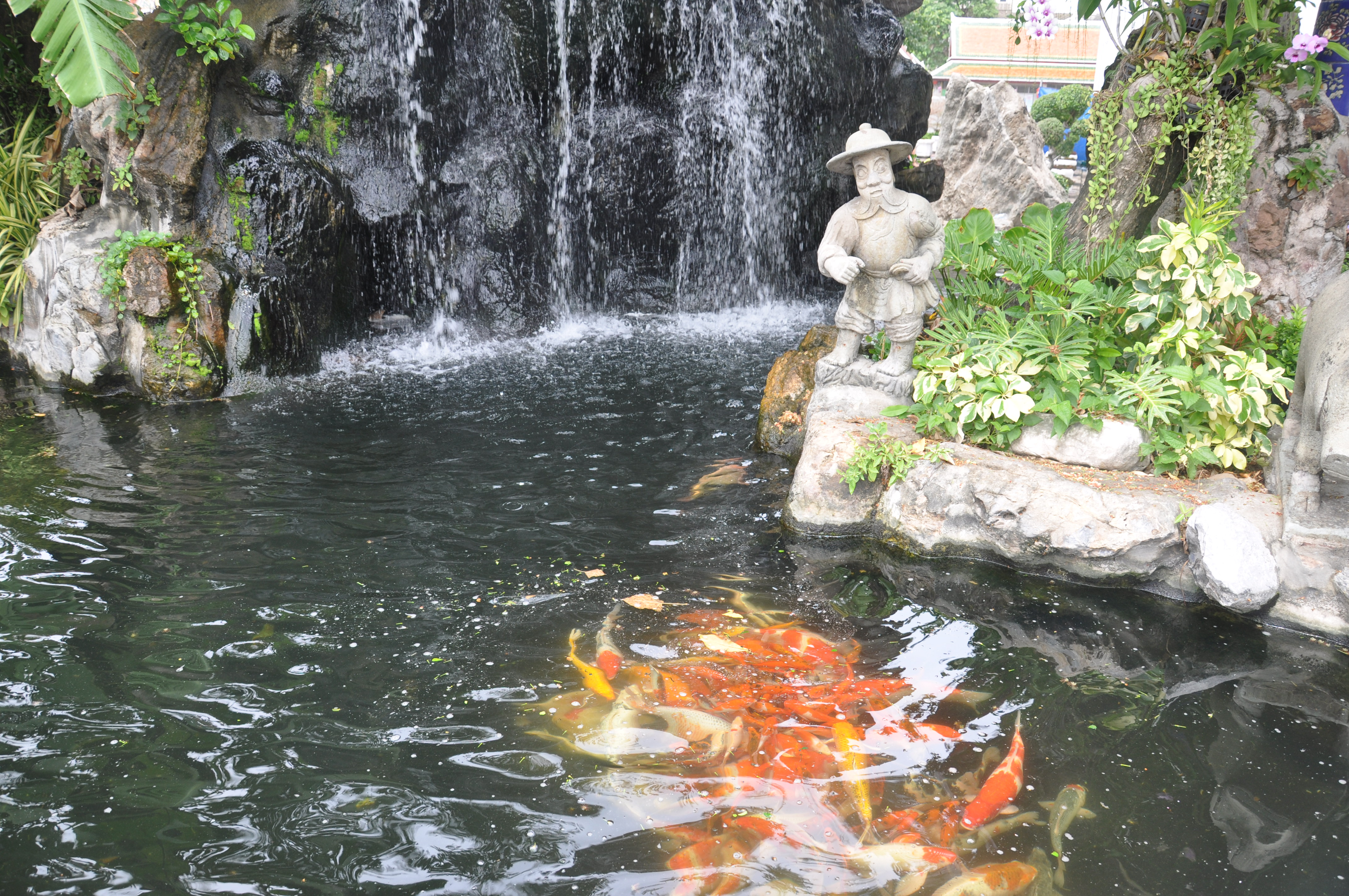 File koi pond wat pho jpg wikimedia commons Kio ponds