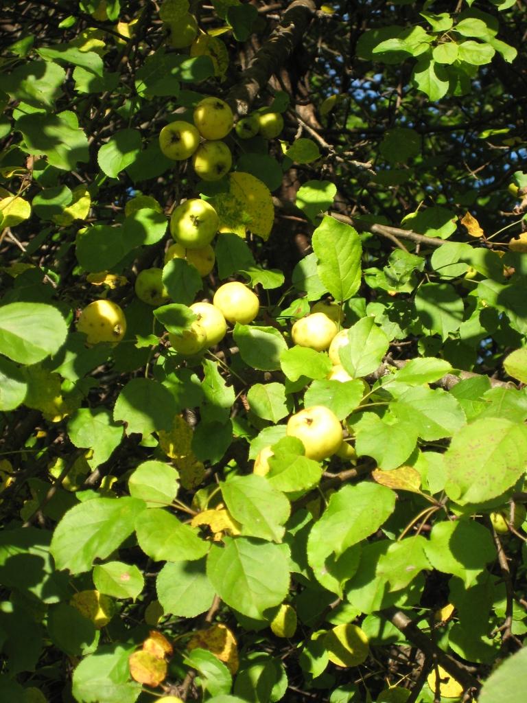 Vezi subiect plante utile for Plante utile