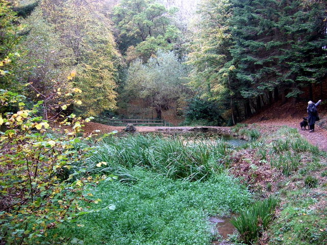 Paradise Bottom in Leigh Woods - geograph.org.uk - 1592261