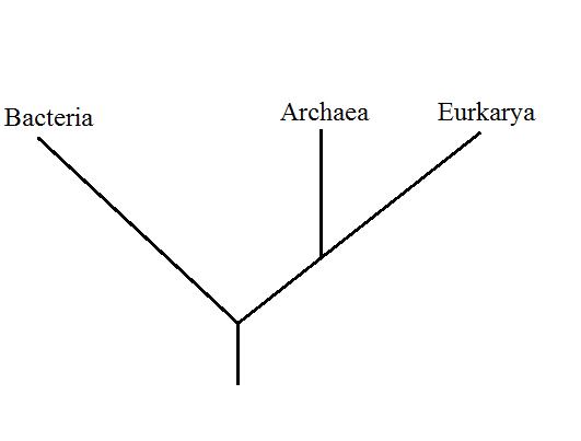 Arborescence Wikipedia
