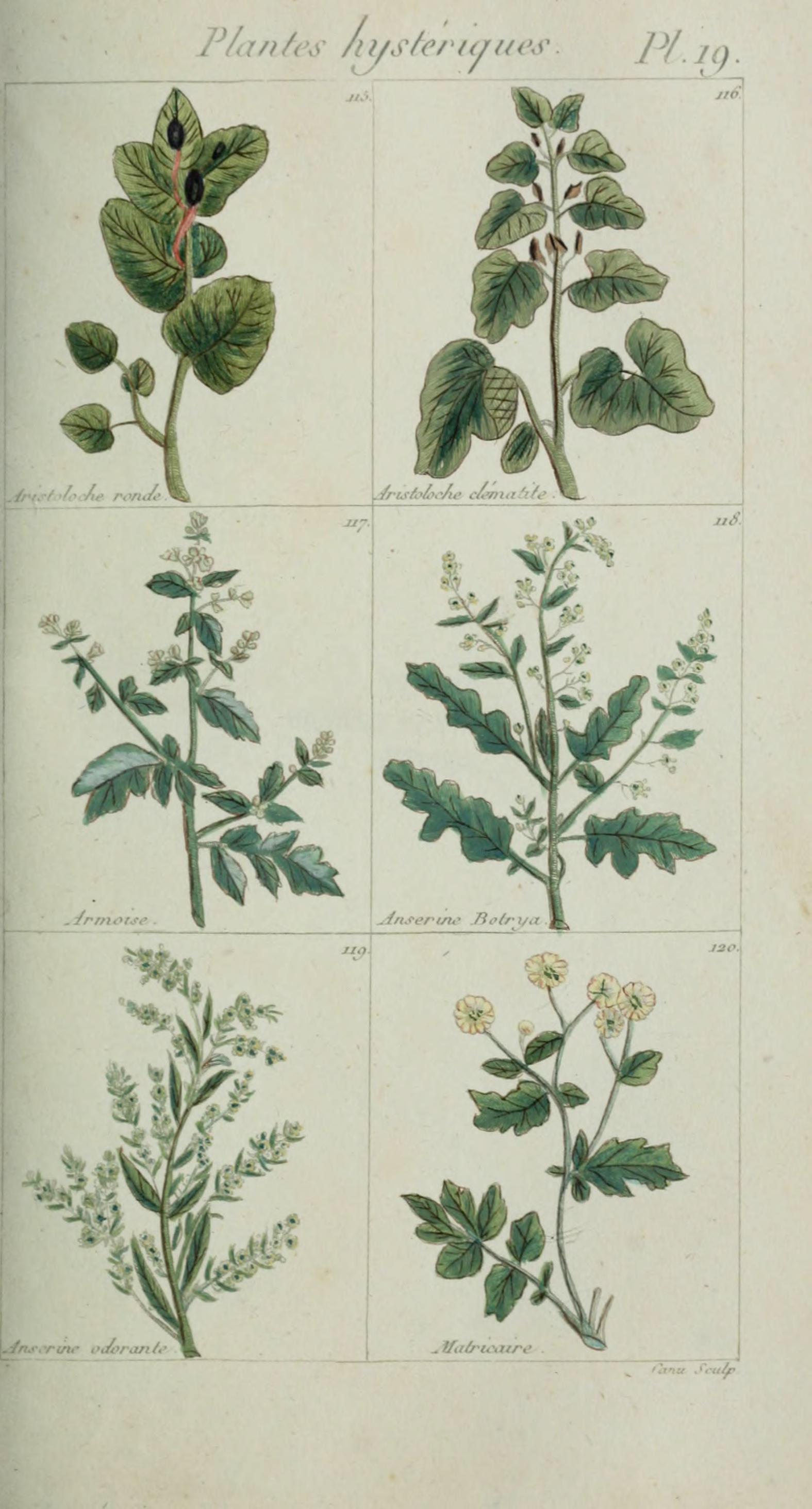 File plantes usuelles indig nes et exotiques pl 19 for Plante exotique