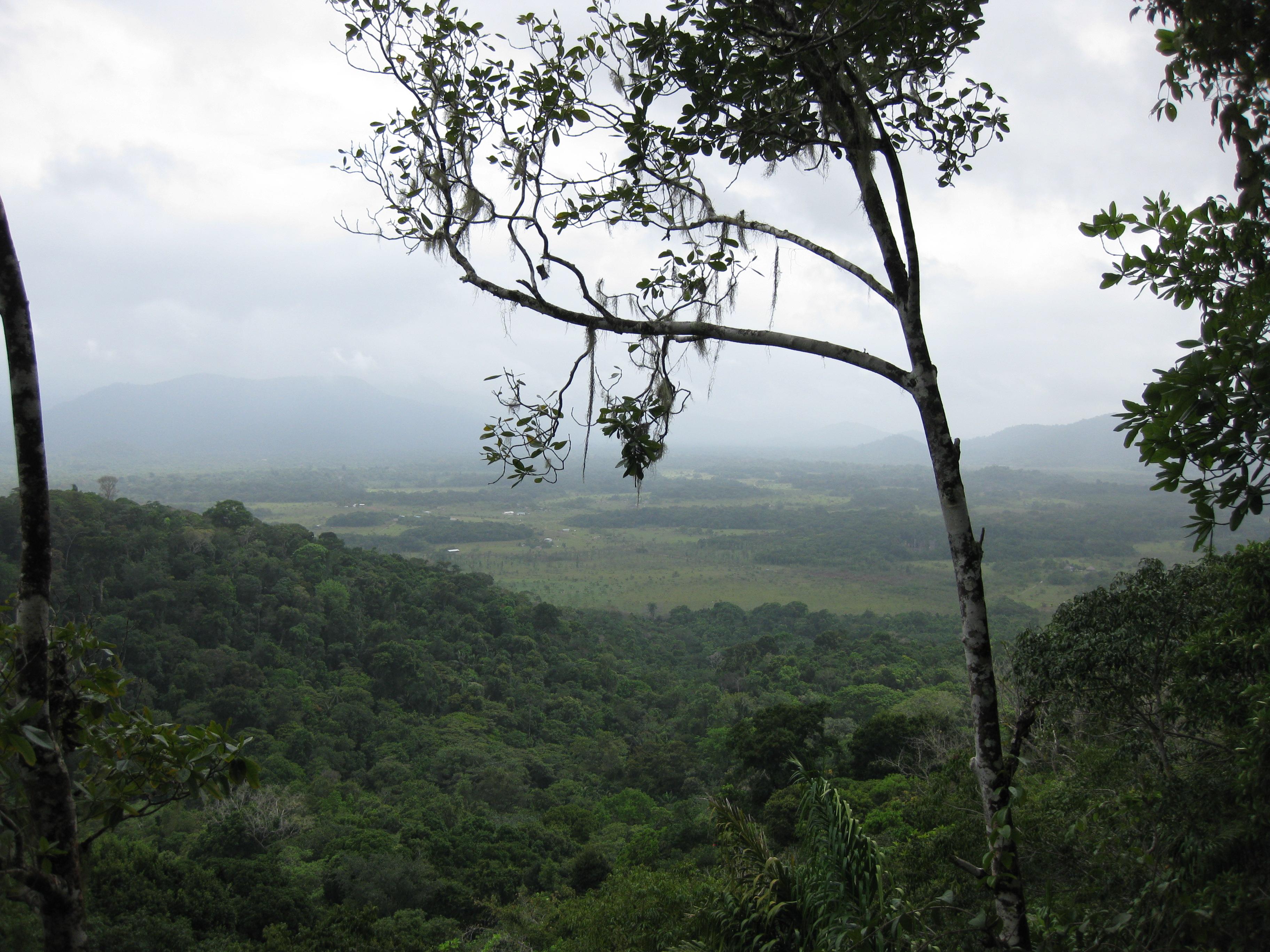 file rainforest in guyana jpg wikimedia commons