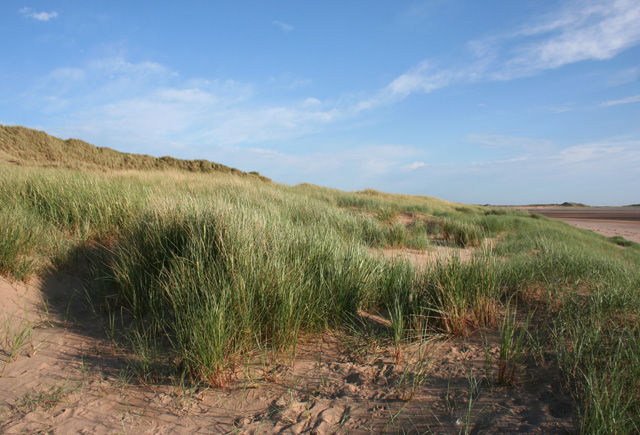 Sand dunes at Sandscale Haws - geograph.org.uk - 849938
