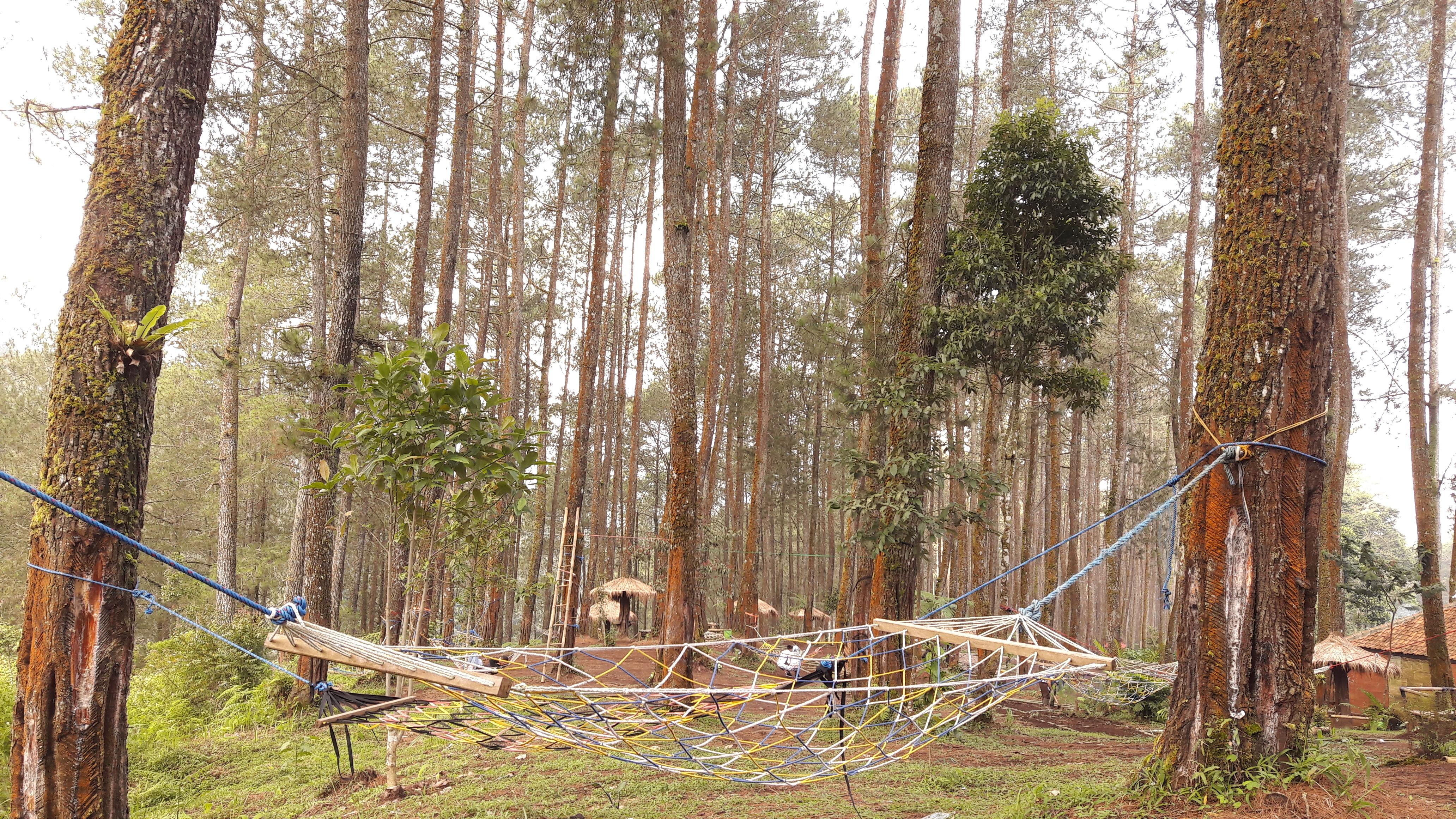 File:Wisata Hutan Pinus Cikole Lembang PAL 16, 6062017.jpg - Wikimedia Commons