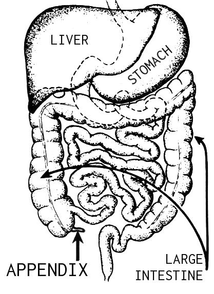 Appendix (PSF)