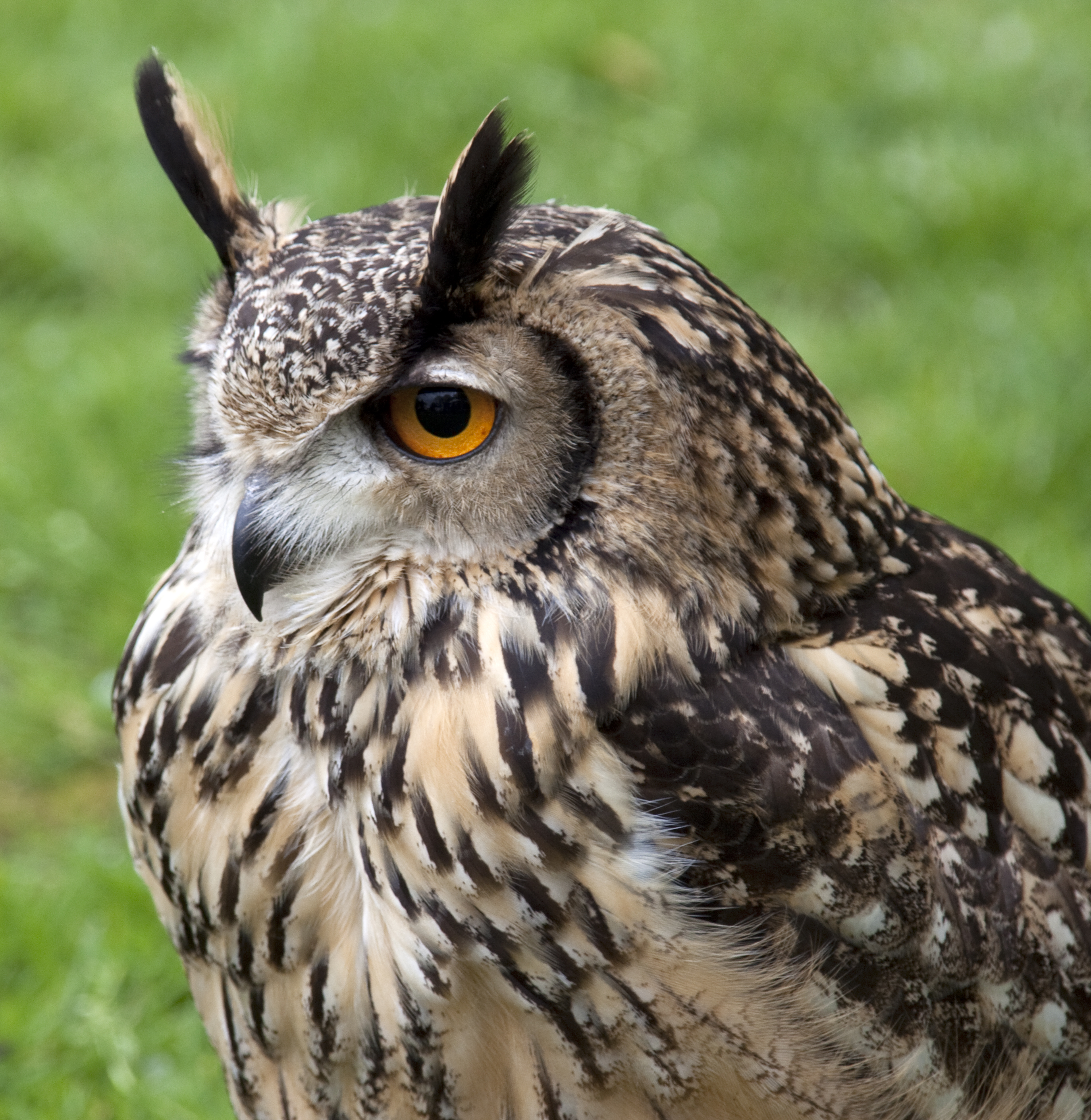 Images Of Owls Coloring Pages
