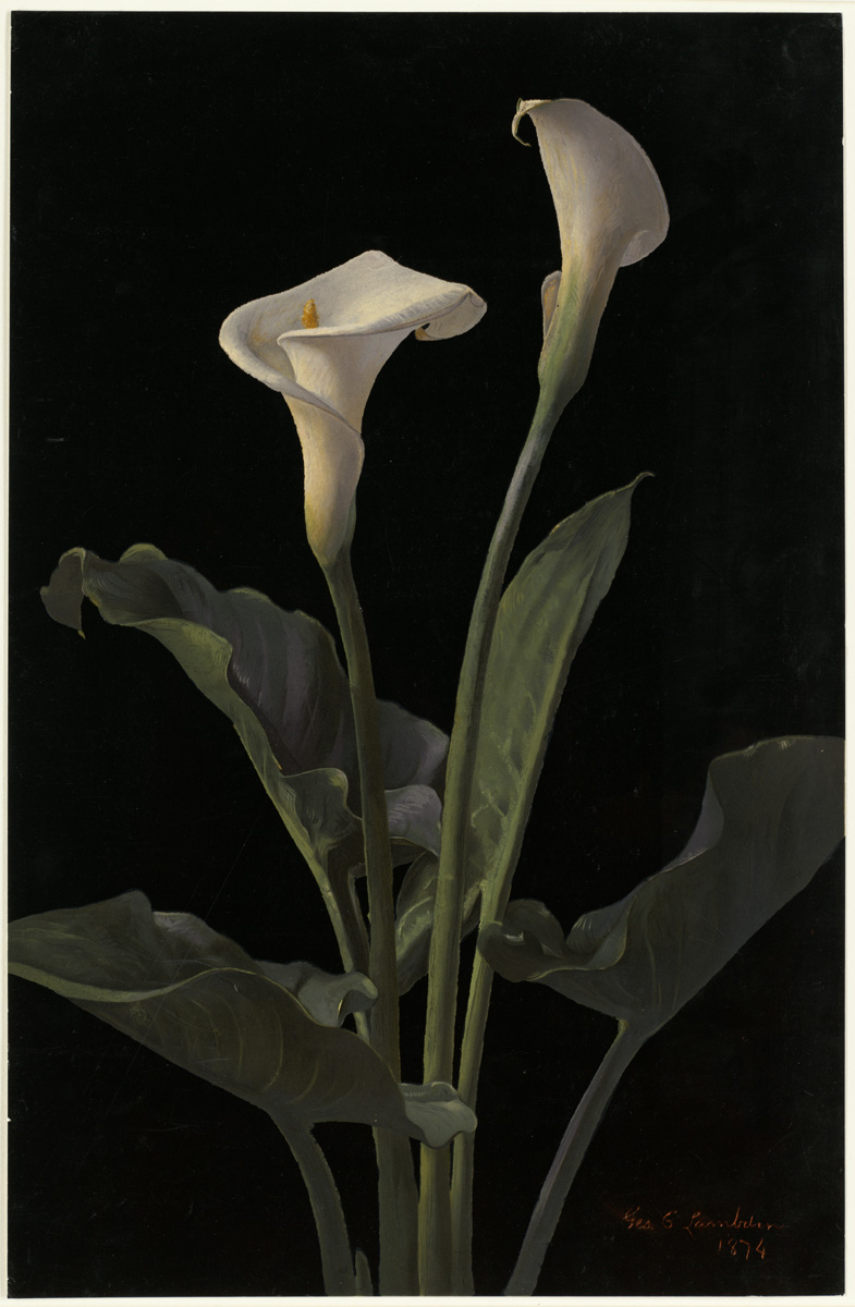 http://upload.wikimedia.org/wikipedia/commons/6/6d/Calla_Lilies_by_Boston_Public_Library.jpg