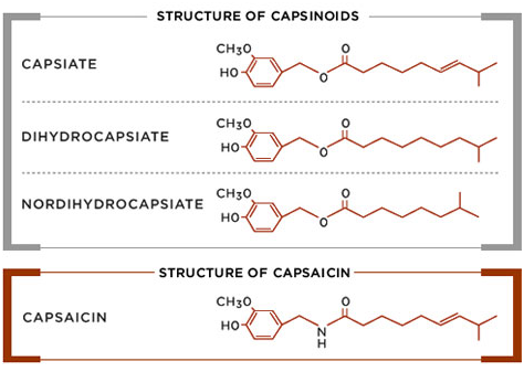Structure of capsinoids, including capsiate, dihydrocapsiate, and nordihydrocapsiate.