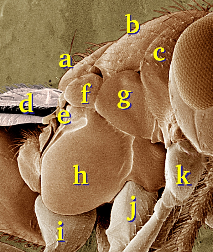 Image Result For Insect Journal Page