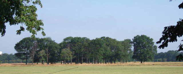 Clump of trees in Wanstead Flats - geograph.org.uk - 112250