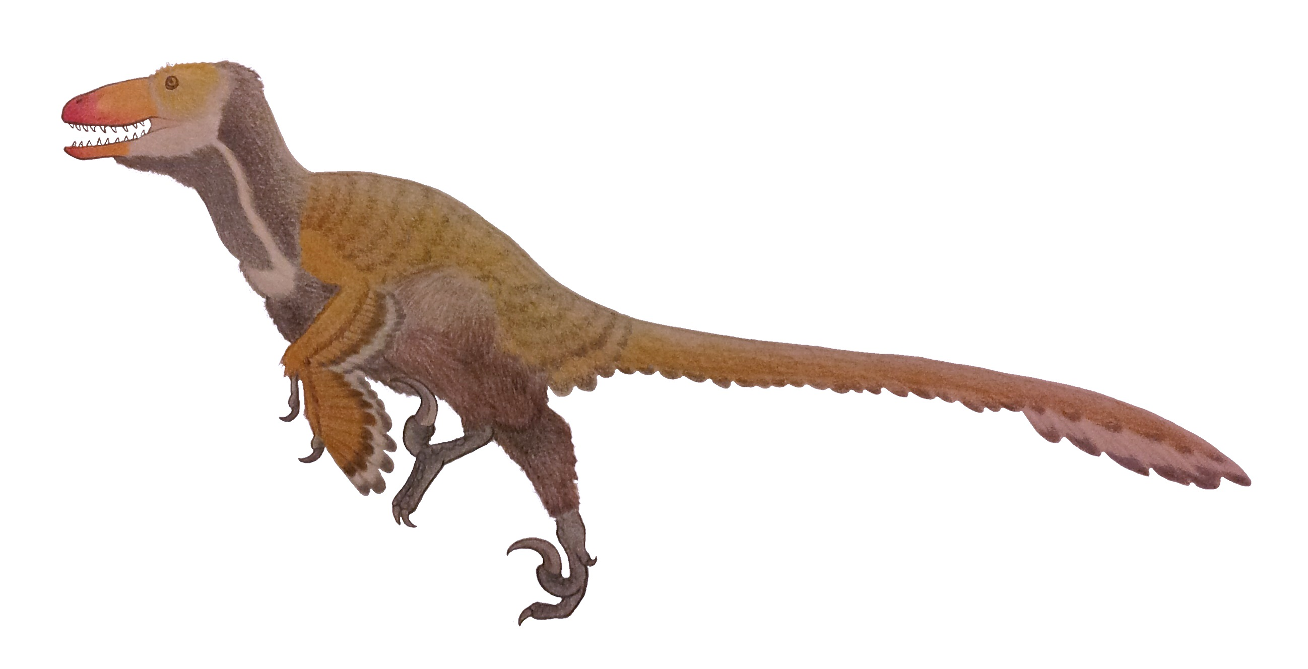 Ouranosaurus  Facts and Figures  ThoughtCo