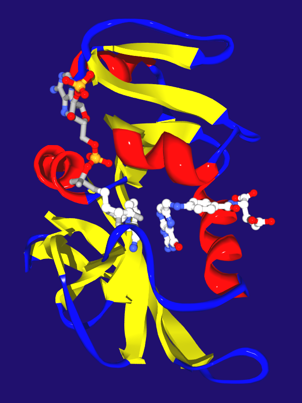 Enzyme kinetics - Wikipedia