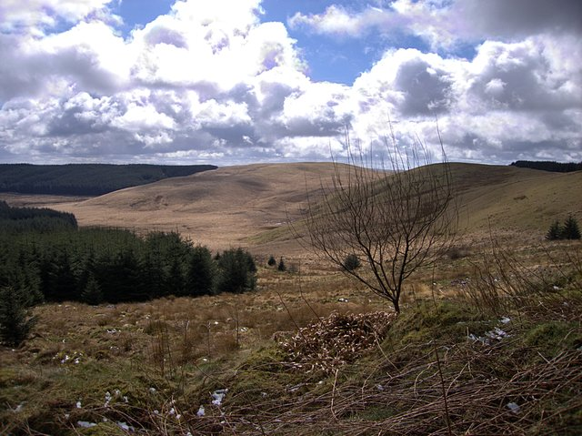 File:Edge of Tywi Fechan forest - geograph.org.uk - 739540.jpg