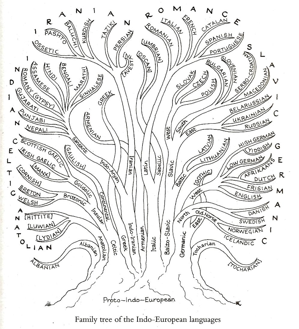 file family tree of the indo