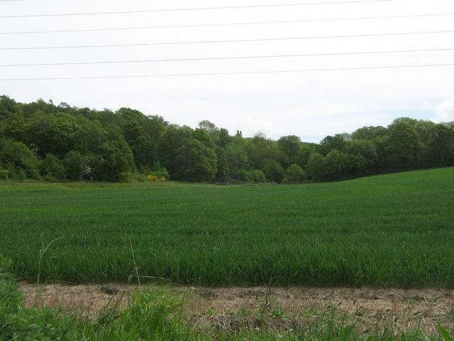 Farningham Wood Nature Reserve - geograph.org.uk - 1302799